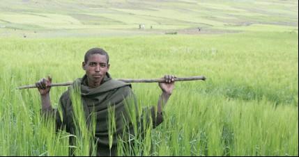 Ethiopian farmer Ato Admasu