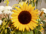 color photo of sunflower