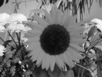 sunflower converted to grayscale using lightness algorithm