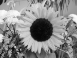sunflower converted to grayscale using luminosity algorithm