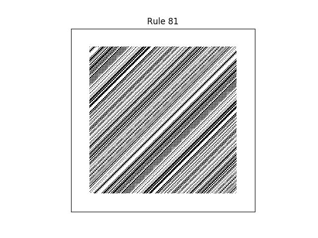 rule 81 with random initial conditions