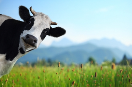 Gravitational attraction of stars and cows