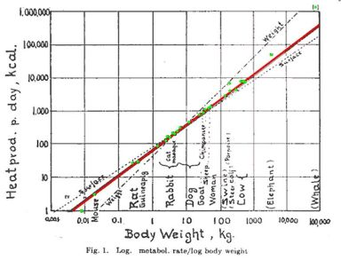 Kleiber M. (1947). Body size and metabolic rate. Physiological Reviews 27: 511-541.