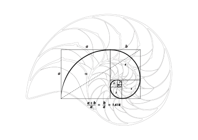 Nautilus, golden ratio