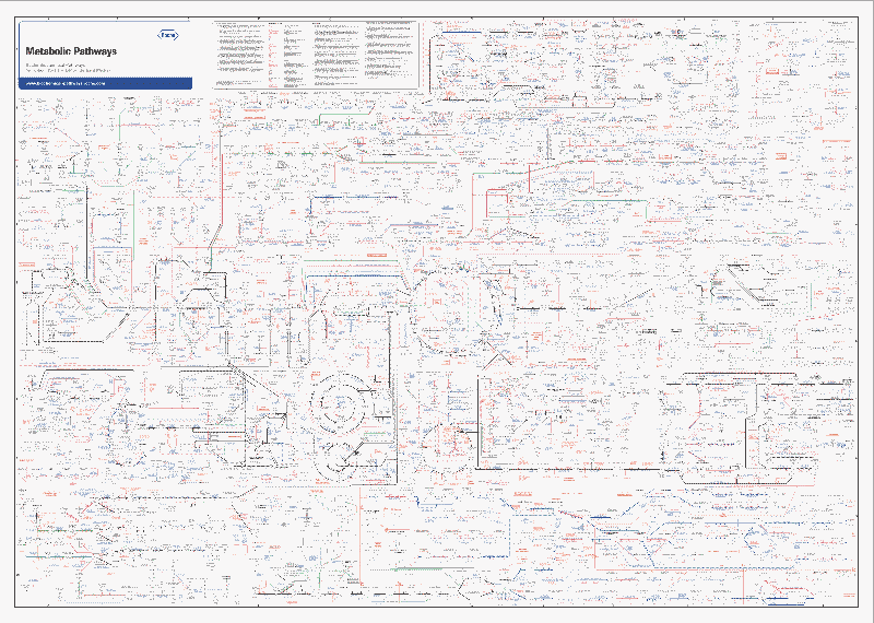 biochemical pathways thumbnail