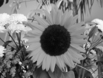 sunflower converted to grayscale using average algorithm